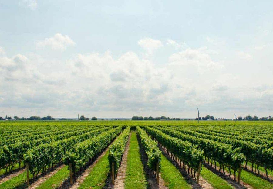 Wineries on the Mornington Peninsula